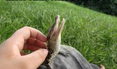 thats the spot lizard crocodile animal funny pics pictures pic picture image photo images photos lol
