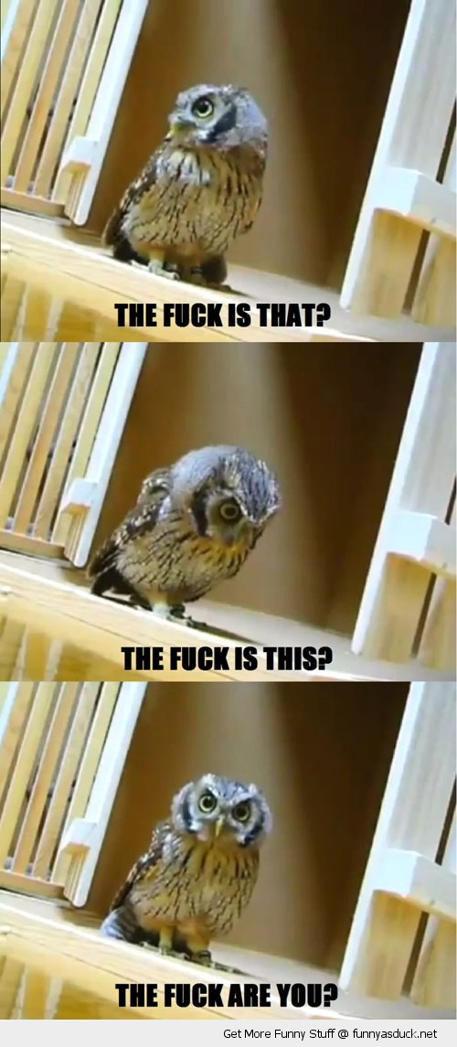 funny confused owl the fuck bird animal funny pics pictures pic picture image photo images photos lol