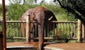 thirsty elephant excuse me swimming pool animal funny pics pictures pic picture image photo images photos lol