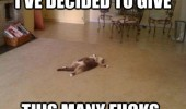 cat flat out floor give this many fucks aniaml lolcat funny pics pictures pic picture image photo images photos lol