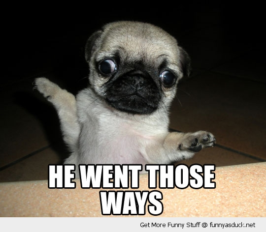 he went those ways cross eyed dog pug funny pics pictures pic picture image photo images photos lol
