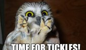 time for tickles eveil owl bird talons funny pics pictures pic picture image photo images photos lol