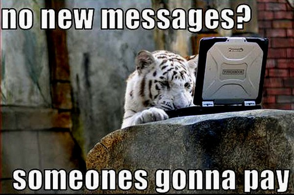 tiger laptop messages meme funny pics pictures pic picture image photo images photos lol