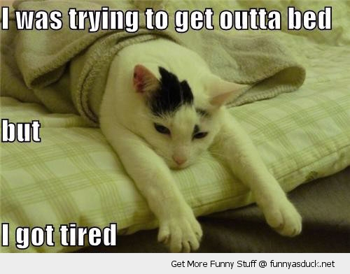 tired out of bed cat lolcat animal funny pics pictures pic picture image photo images photos lol