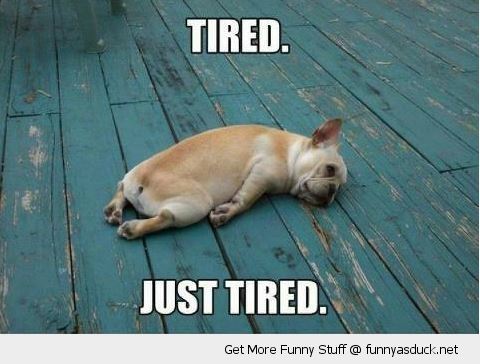 just tired dog animal funny pics pictures pic picture image photo images photos lol