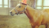 unicorn horses traffic cone animal stable funny pics pictures pic picture image photo images photos lol
