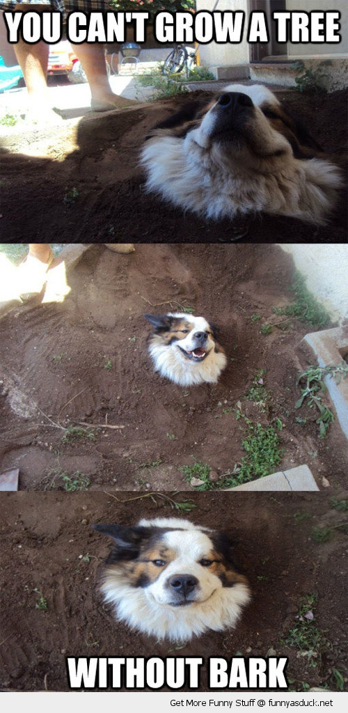 dog in ground hole tree bark animal funny pics pictures pic picture image photo images photos lol
