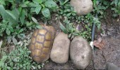 turtle rock hiding animal funny pics pictures pic picture image photo images photos lol