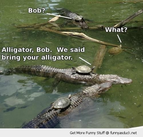 i said bring you alligator turtles swamp funny pics pictures pic picture image photo images photos lol