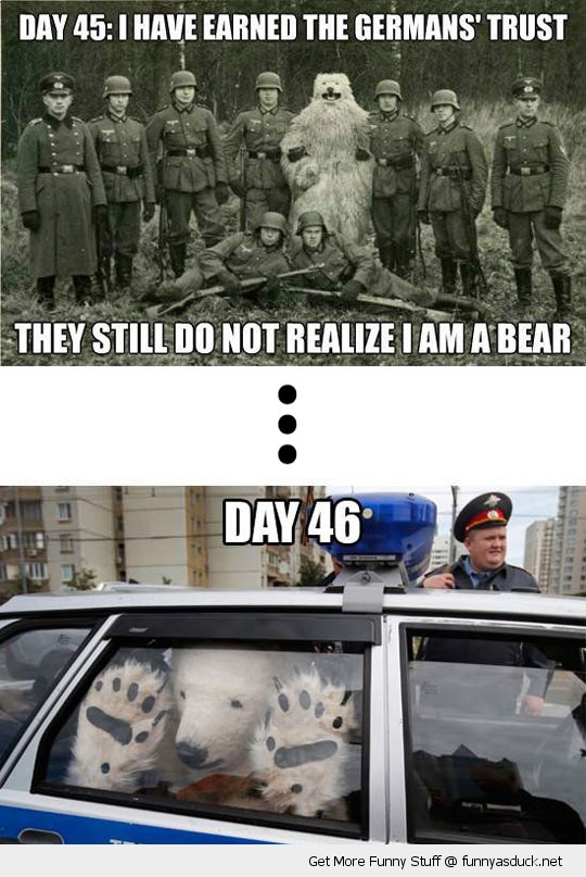 undercover bear soilders car animal funny pics pictures pic picture image photo images photos lol