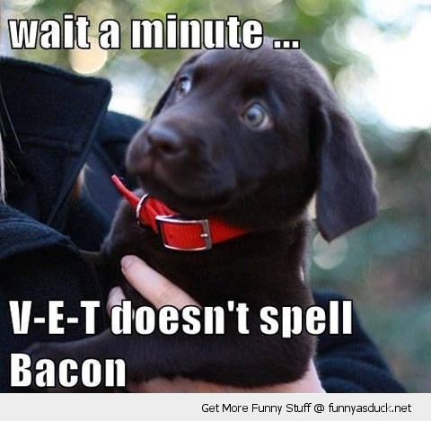 dog shocked vet bacon animal puppy funny pics pictures pic picture image photo images photos lol