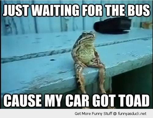 toad frog animal waiting on bus funny pics pictures pic picture image photo images photos lol