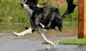 look at me jesusing dog walk on water animal funny pics pictures pic picture image photo images photos lol