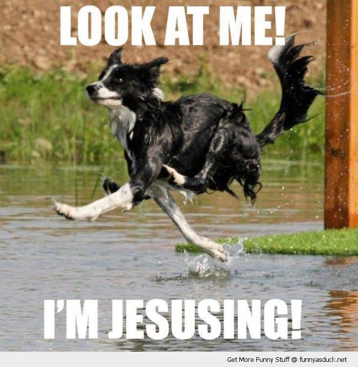 look at me jesusing dog walk on water animal funny pics pictures pic ...