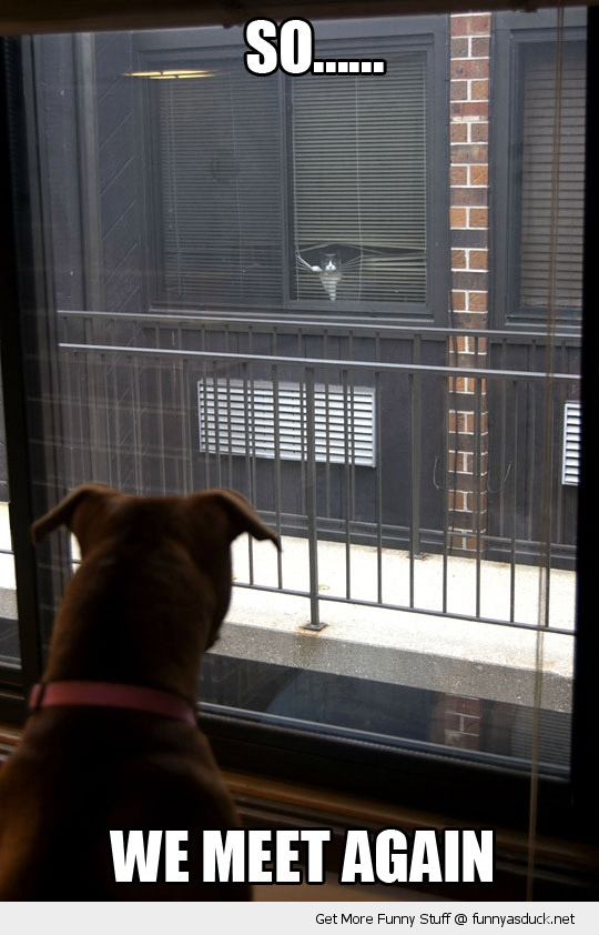 we meet again cat dog animal window funny pics pictures pic picture image photo images photos lol