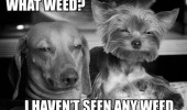 what weed stoned dogs wasted animals funny pics pictures pic picture image photo images photos lol