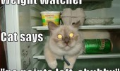 weight watcher cat lolcat animal fridge chubby funny pics pictures pic picture image photo images photos lol