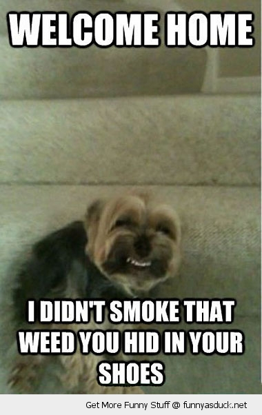 high dog weed shoe stoned animal stairs funny pics pictures pic picture image photo images photos lol