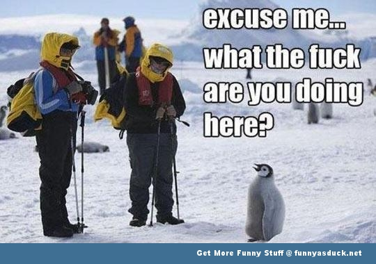 excuse me what the fuck penguin animal funny pics pictures pic picture image photo images photos lol