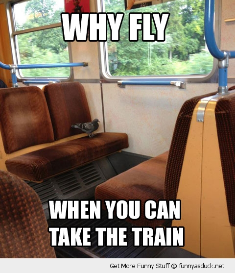 why fly pigeon bird train funny pics pictures pic picture image photo images photos lol