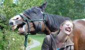 long face horse laughing animal funny pics pictures pic picture image photo images photos lol