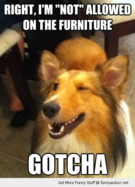 gotcha dog winking wink furniture animal funny pics pictures pic picture image photo images photos lol