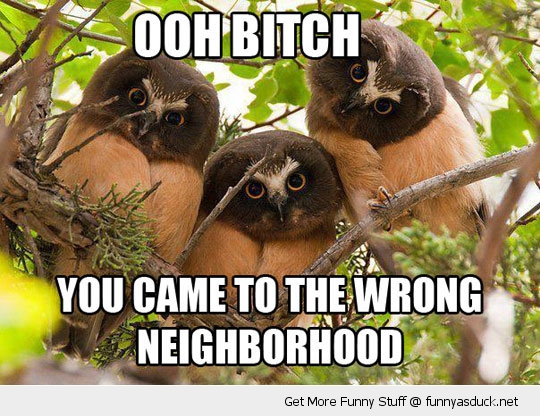 ohh bitch wrong neighborhood owl bird funny pics pictures pic picture image photo images photos lol