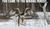 wrong forest bird animal knife funny pics pictures pic picture image photo images photos lol