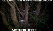 wrong neighbourhood motherfucker raccoons animals tree funny pics pictures pic picture image photo images photos lol