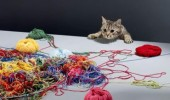 yarnia cat yarn wool balls animal lolcat funny pics pictures pic picture image photo images photos lol