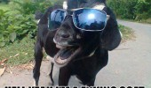 yeah fucking goat shades sun glasses animal funny pics pictures pic picture image photo images photos lol