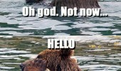 not now bear hello phone river water animal funny pics pictures pic picture image photo images photos lol