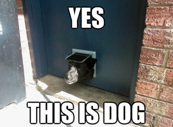 dog yes cat flap animal funny pics pictures pic picture image photo images photos lol