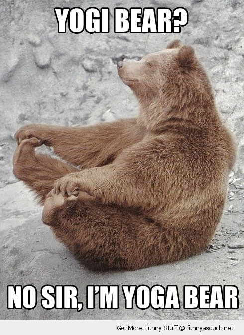 yoga bear yogi animal feet funny pics pictures pic picture image photo images photos lol