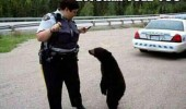 yogi bear picnic basket police cop bitch funny pics pictures pic picture image photo images photos lol