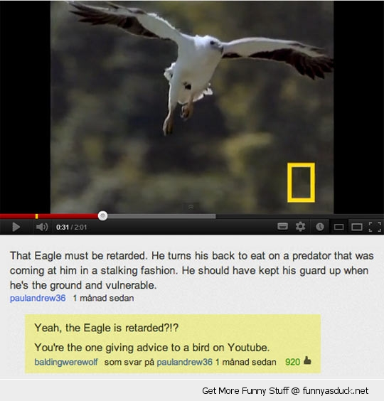 you tube comment advise to birds funny pics pictures pic picture image photo images photos lol