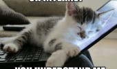 oh internet cat kitten sleeping laptop understand funny pics pictures pic picture image photo images photos lol