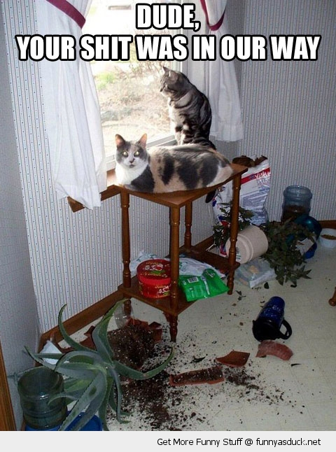 cat animal lolcat table broken shit funny pics pictures pic picture image photo images photos lol
