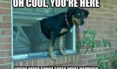 cool your here dog window blind happened animal funny pics pictures pic picture image photo images photos lol
