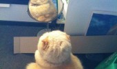 fat cat what have i become mirror animal lolcat funny pics pictures pic picture image photo images photos lol