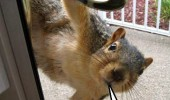squirrel animal nuts door funny pics pictures pic picture image photo images photos lol