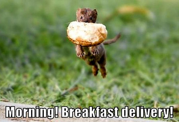 weasel breakfast delivery animal meme funny pics pictures pic picture image photo images photos lol