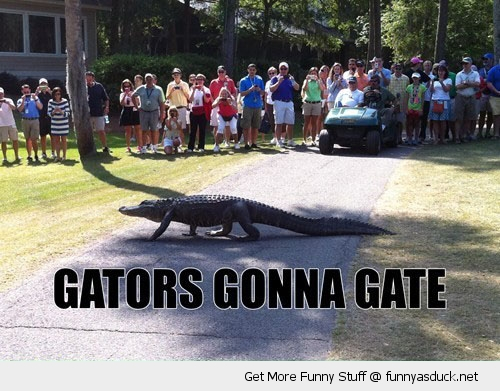 alligator animal walking street garden gators gonna gate road funny pics pictures pic picture image photo images photos lol