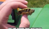 put me down angry baby turtle tortoise animal funny pics pictures pic picture image photo images photos lol