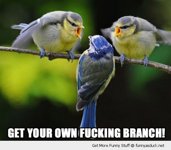 angry birds animals shouting own fucking branch nature funny pics pictures pic picture image photo images photos lol