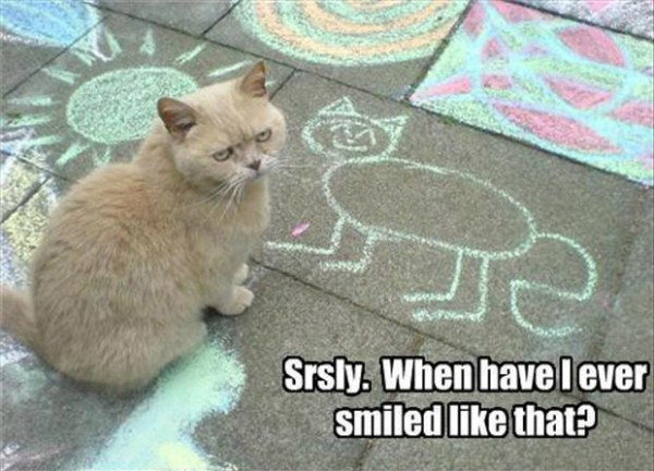 angry cat lolcat animal chalk drawing pavement sidewalk smiled funny pics pictures pic picture image photo images photos lol