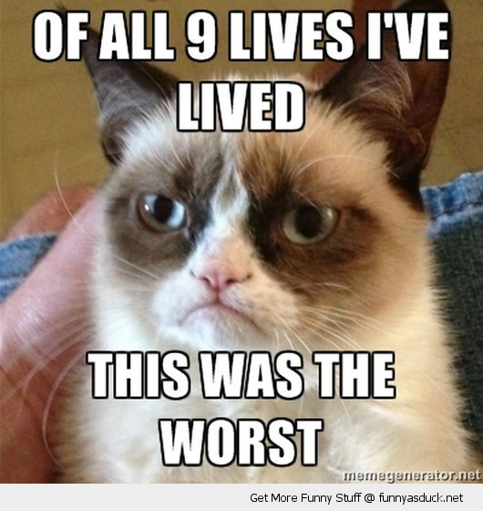 9 lives this is the worst angry cat meme lolcat animal funny pics pictures pic picture image photo images photos lol