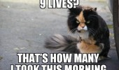 angry grumpy cat animal 9 lives took this morning funny pics pictures pic picture image photo images photos lol