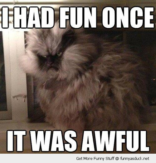 angry grumpy cat lolcat animal fun once awful funny pics pictures pic picture image photo images photos lol