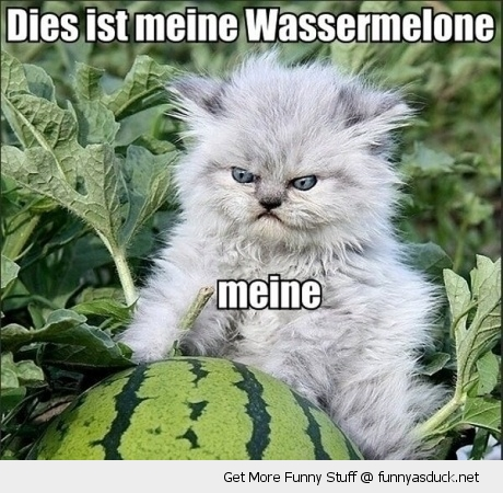 angry grumpy cat animal speaking german meine wassermelon watermelon field funny pics pictures pic picture image photo images photos lol